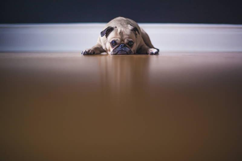 Sad dog lying on the floor